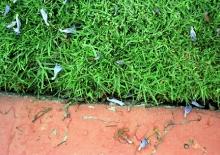 LA grass