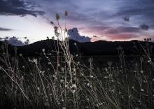 Umbria-Mixed Light